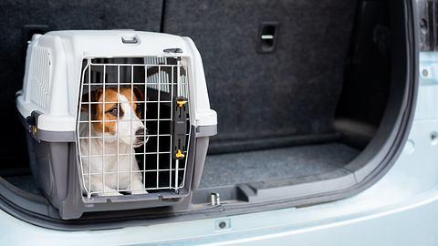 Hund wird in einer Hundebox fürs Auto transportiert. - Foto: iStock/ inside-studio