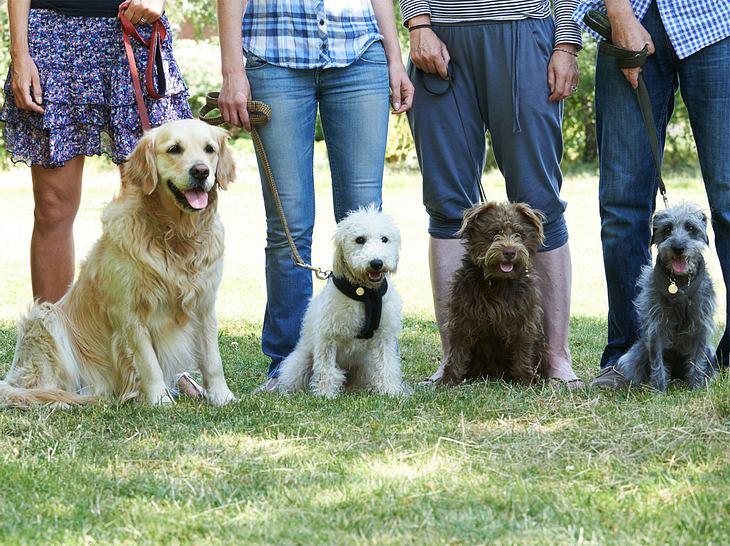 Fragen und Antworten zu Hundeführerschein und Sachkundenachweis für Hundehalter