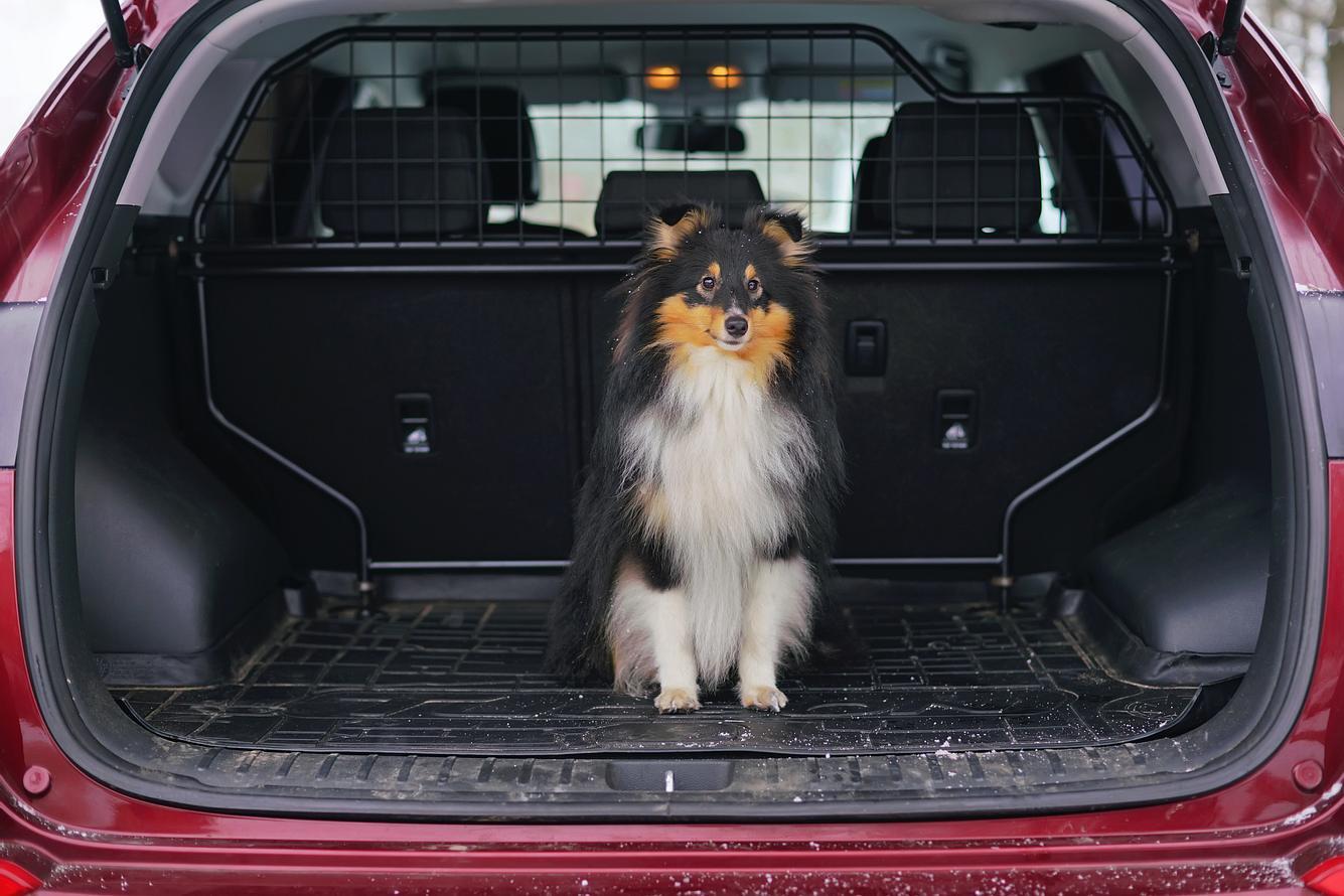 Hund im Kofferraum mit Hundegitter