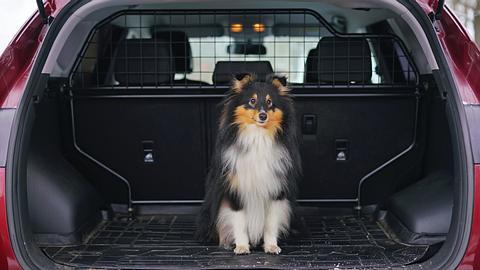 Hund im Kofferraum mit Hundegitter - Foto: iStock/Eudyptula