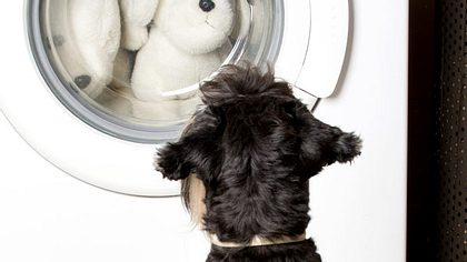 Tierhaare in der Waschmaschine