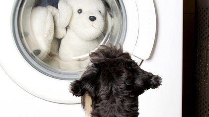 Hundehaare in der Waschmaschine.