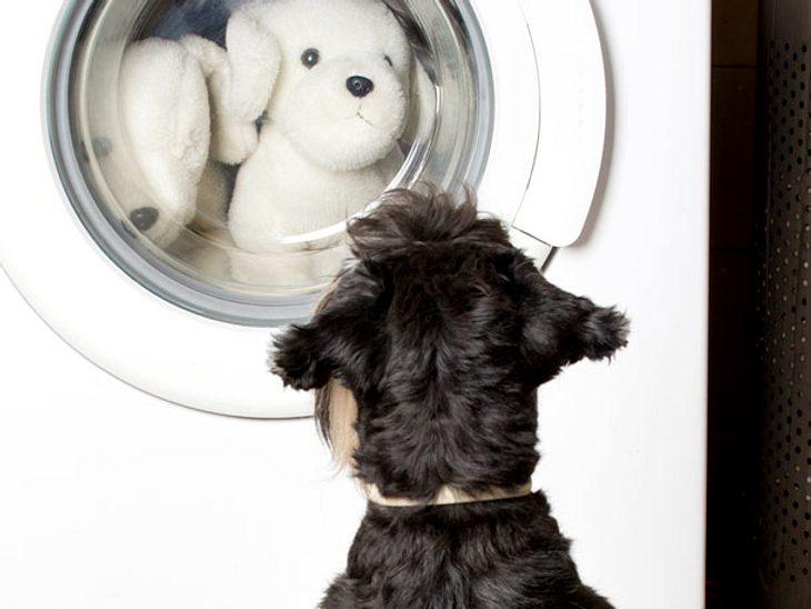 Hundehaare in der Waschmaschine