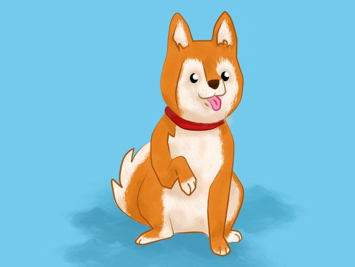 Hundesprache: Was es bedeutet, wenn der Hund eine Pfote hebt.