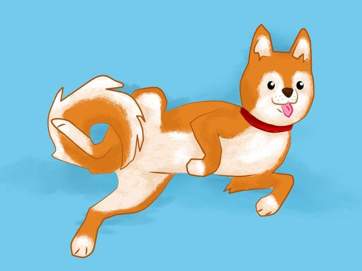 Hundesprache verstehen: Wenn der Hund sein Bäuchlein zeigt ...