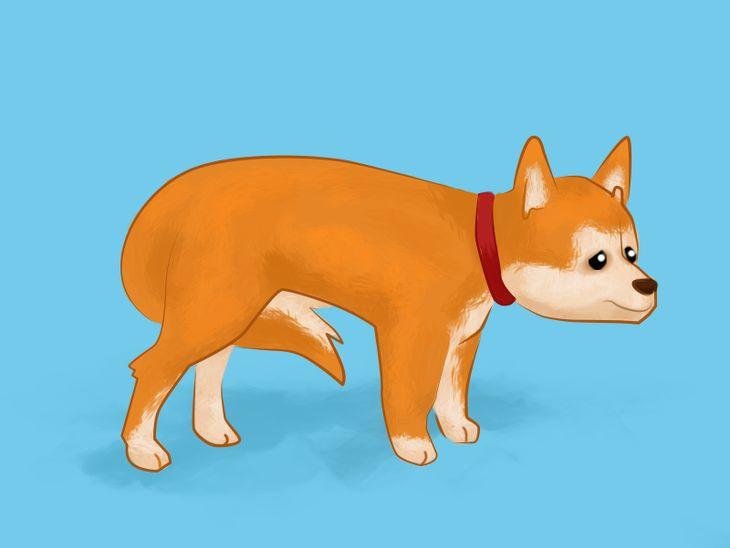 Hundesprache verstehen: Was bedeutet eine eingezogene Rute?