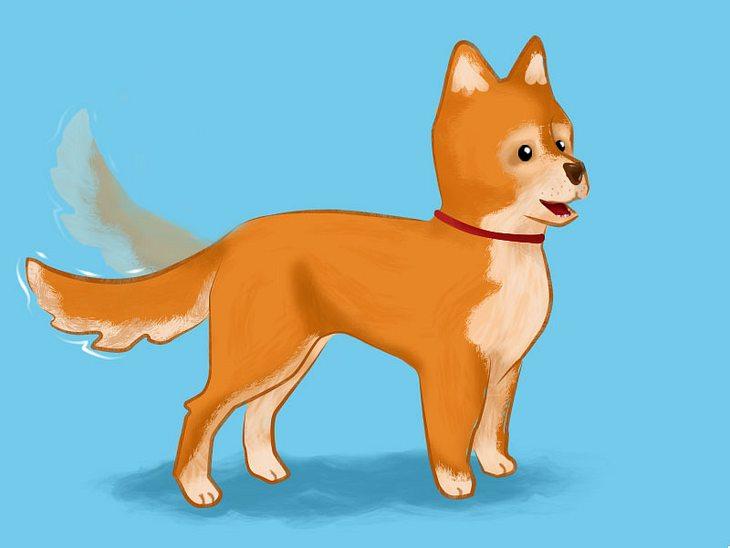 Hundesprache verstehen: ein nach unten gerichteter Schwanz.
