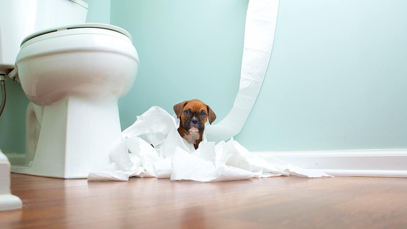 Hund neben Toilette