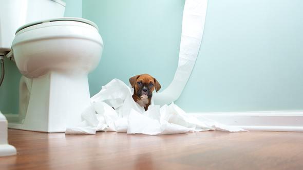 Hund neben Toilette - Foto: iStock/jjneff