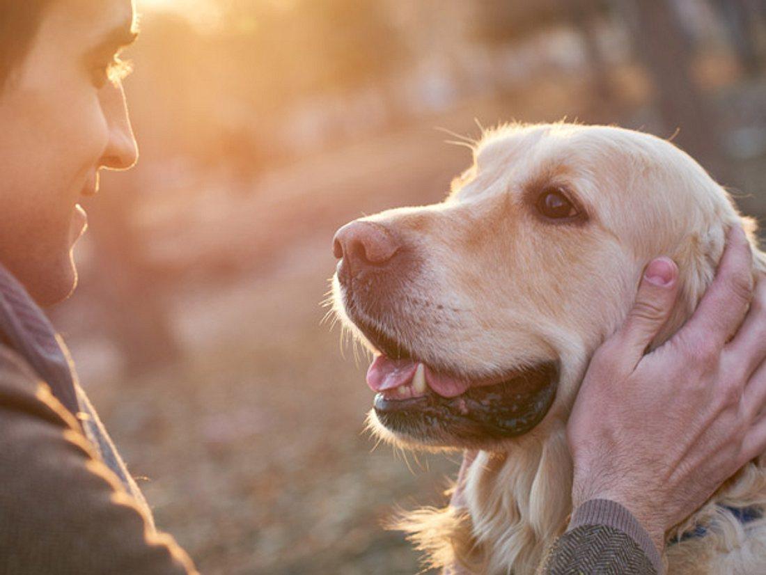 Hund rettet Mann das Leben.