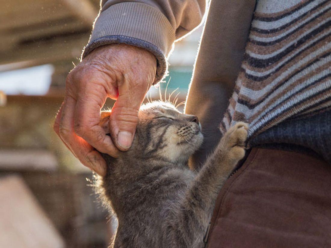 Hinter dem Rücken seiner Frau nahm der 85-jährige Jimmy ein heimatloses Kätzchen auf.