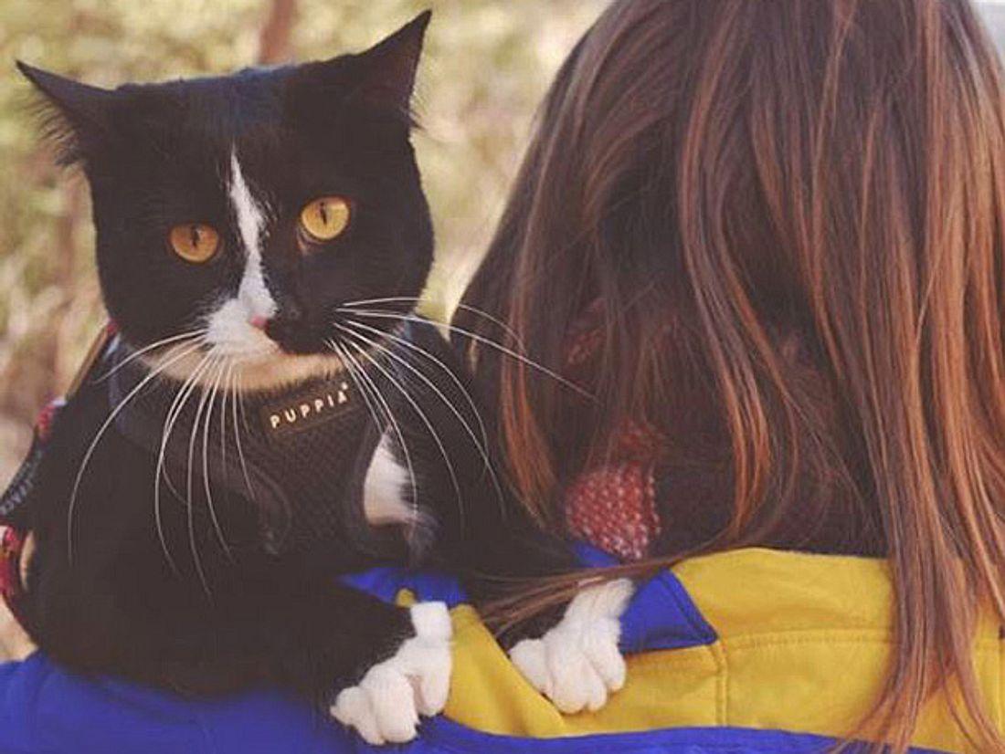 Die Katze Quandary Q Lotus Lady aus Colorado geht mit ihren Besitzern regelmäßig auf Abenteuerreise.