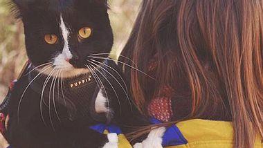 Die Katze Quandary Q Lotus Lady aus Colorado geht mit ihren Besitzern regelmäßig auf Abenteuerreise. - Foto: Instagram / exploration_cat
