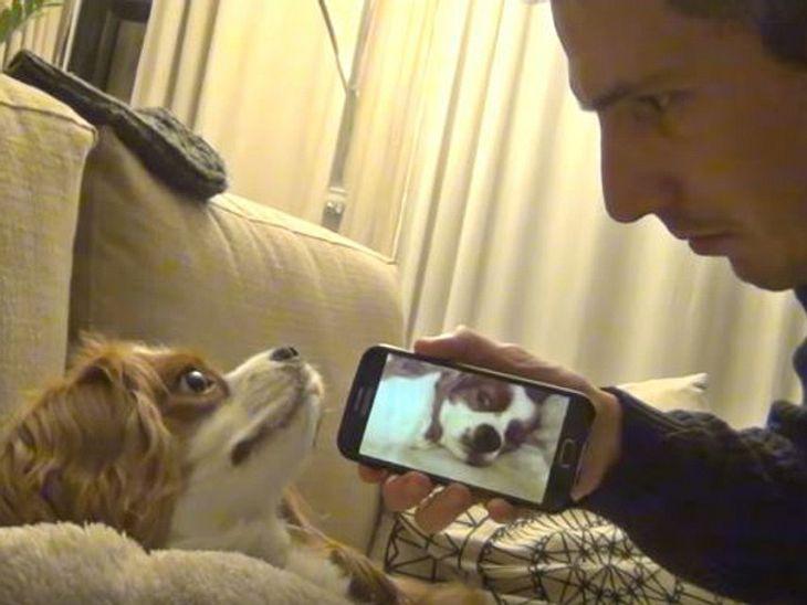 In einem witzigen Internet-Video weckt ein Herrchen seinen schlafenden Hund mit dessen eigenem Schnarch-Geräusch.