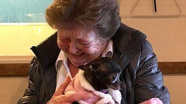 Nachdem ihr geliebter Chihuahua gestorben war, wollte die 73-jährige Jerri McCutcheon eigentlich keinen neuen Hund mehr - doch in Minnie verliebte sie sich auf den ersten Blick. - Foto: Facebook / The Humane Society of Western Montana