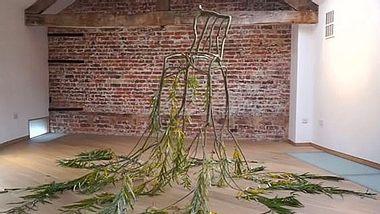 Die Firma Full Grown aus England stellt aus Bäumen einzigartige Möbel her, die nur durch das Wachsen der Äste entstehen. - Foto: Facebook / Full Grown Ltd