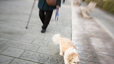 Als eine Hamburgerin mit ihrem Hund Gassi geht, entführen zwei Männer plötzlich den Vierbeiner und fordern Lösegeld von seinem Frauchen. - Foto: Mercedes Rancaño Otero / iStock