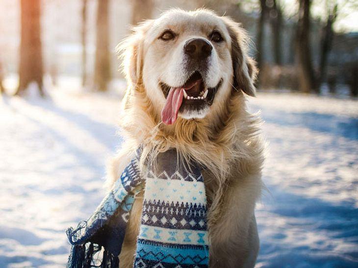 So findet ihr Liebling die kalte Jahreszeit toll