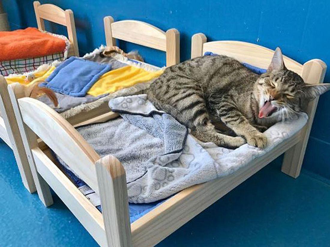 Damit die Katzen nicht länger auf dem Boden schlafen müssen, bekam ein Tierheim in Kanada von IKEA kleine Bettchen geschenkt.