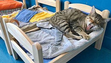 Damit die Katzen nicht länger auf dem Boden schlafen müssen, bekam ein Tierheim in Kanada von IKEA kleine Bettchen geschenkt. - Foto: Instagram / etobicokehumanesociety
