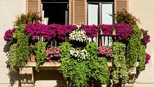 Garten- & Balkonpflanzen