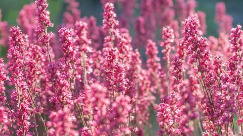 Herbstblüher: Später Farbenzauber für Balkon & Terrasse