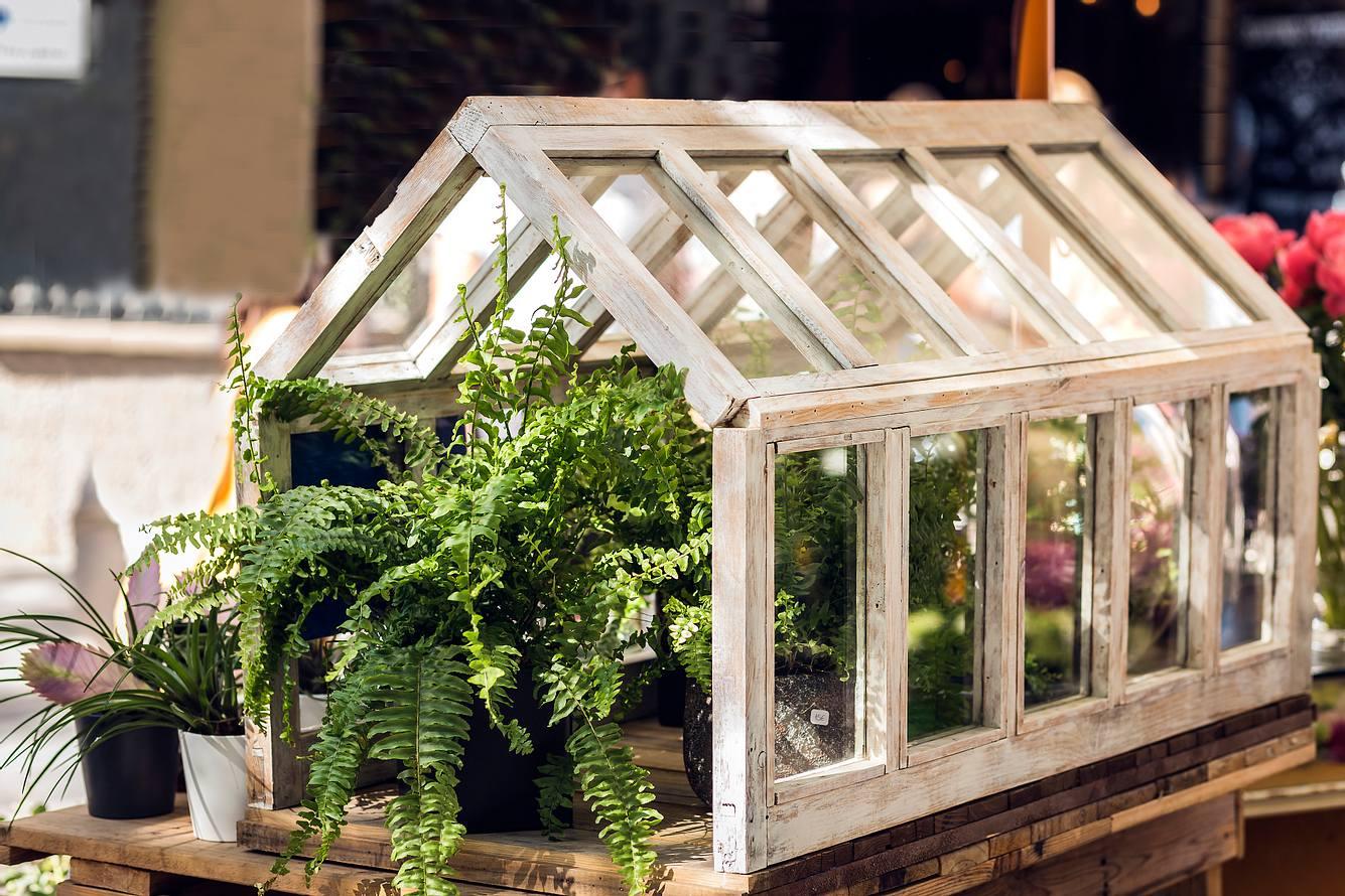 Pflanzen wachsen in einem Indoor Gewächshaus.