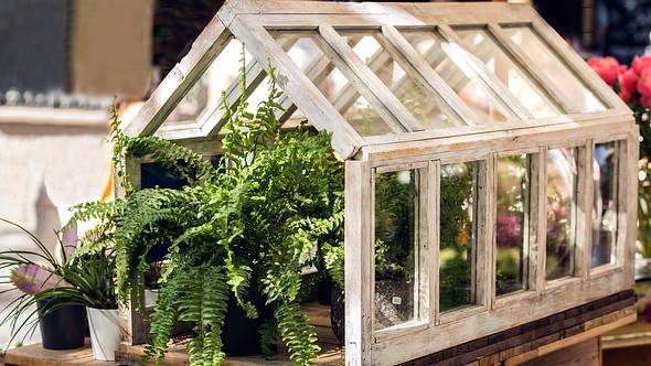 Pflanzen wachsen in einem Indoor Gewächshaus. - Foto: iStock/ kemirada