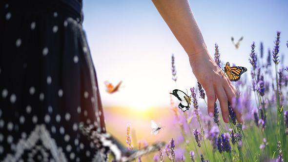 Insektenfreundlicher Garten - Foto: iStock/ borchee