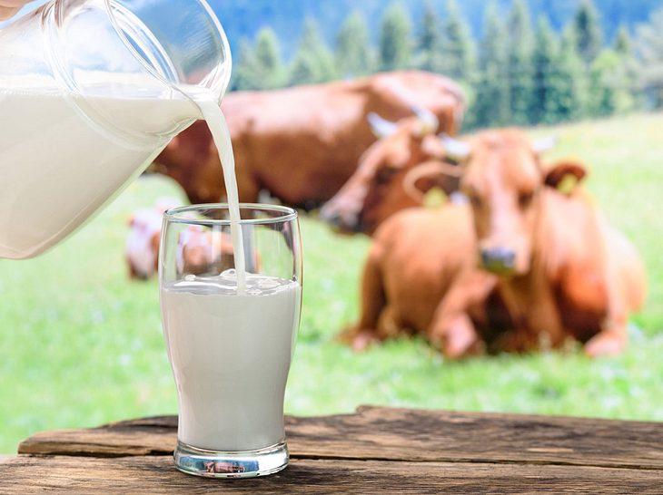 Ist Milch ungesund? 7 Fragen & Antworten im Check