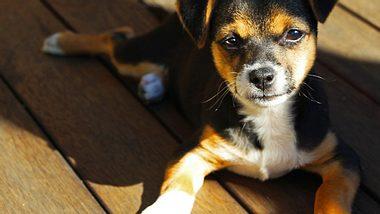 Ein Lebensretter auf vier Pfoten! - Foto: PhotographyByDonnaG / iStock