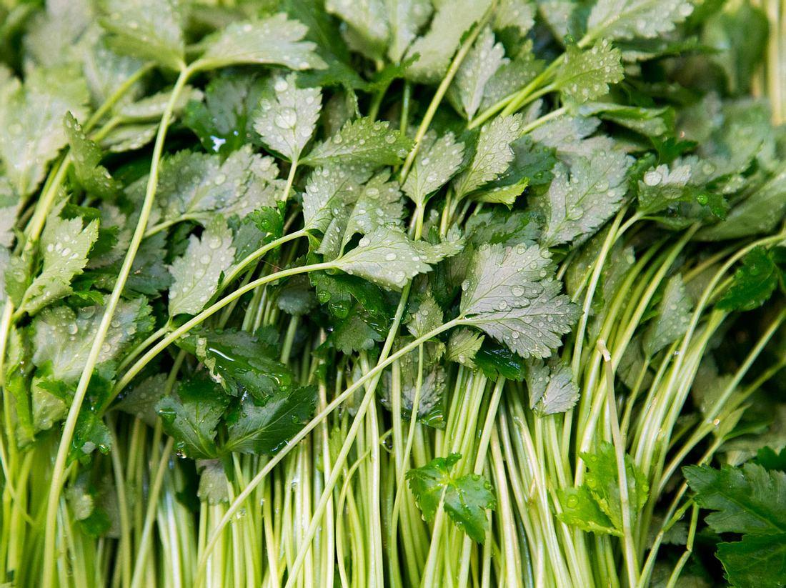 petersilie anpflanzen pflegen ernten liebenswert magazin
