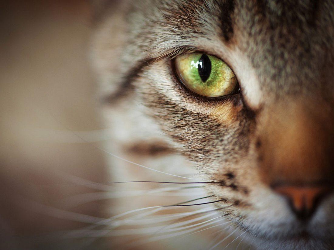 Das Geheimnis der Katzen und wie wir es verstehen