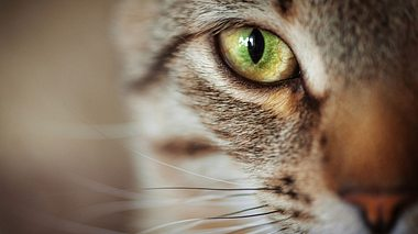 Geheimnis der Katzen