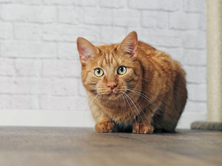 Auch Katzen können an Arthrose erkranken.