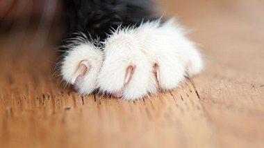 Wie Sie Ihrer Katze das Kratzen an Möbeln abtrainieren - Foto: lopurice / iStock