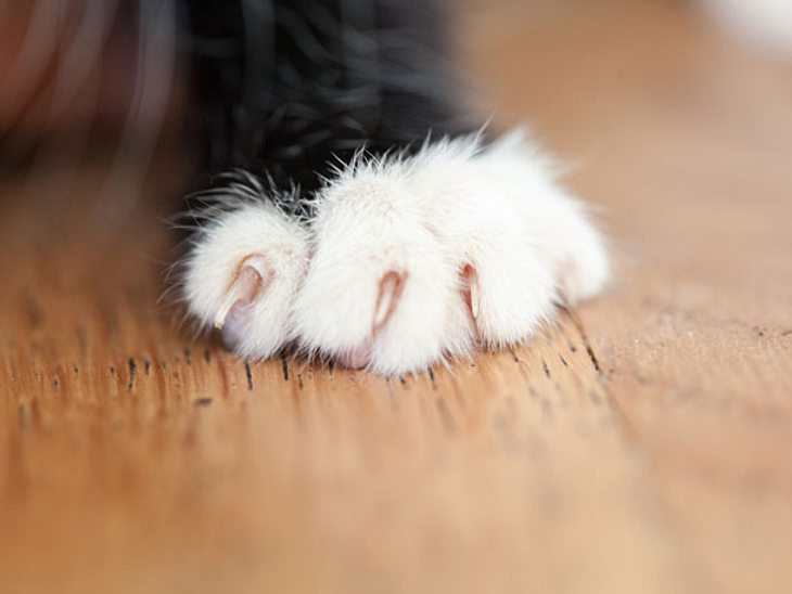 Wie Sie Ihrer Katze das Kratzen an Möbeln abtrainieren
