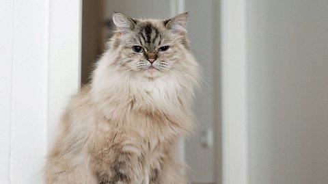 Katze sitzt in der Wohnung.