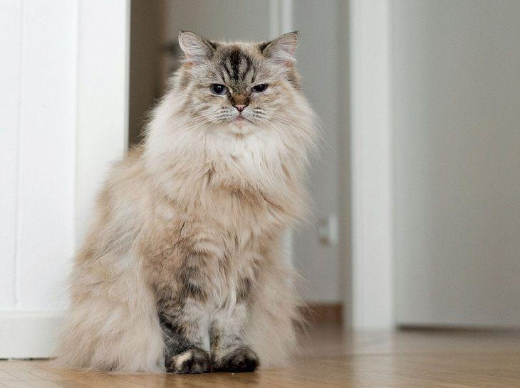 Was tun, wenn die Katze Durchfall hat?