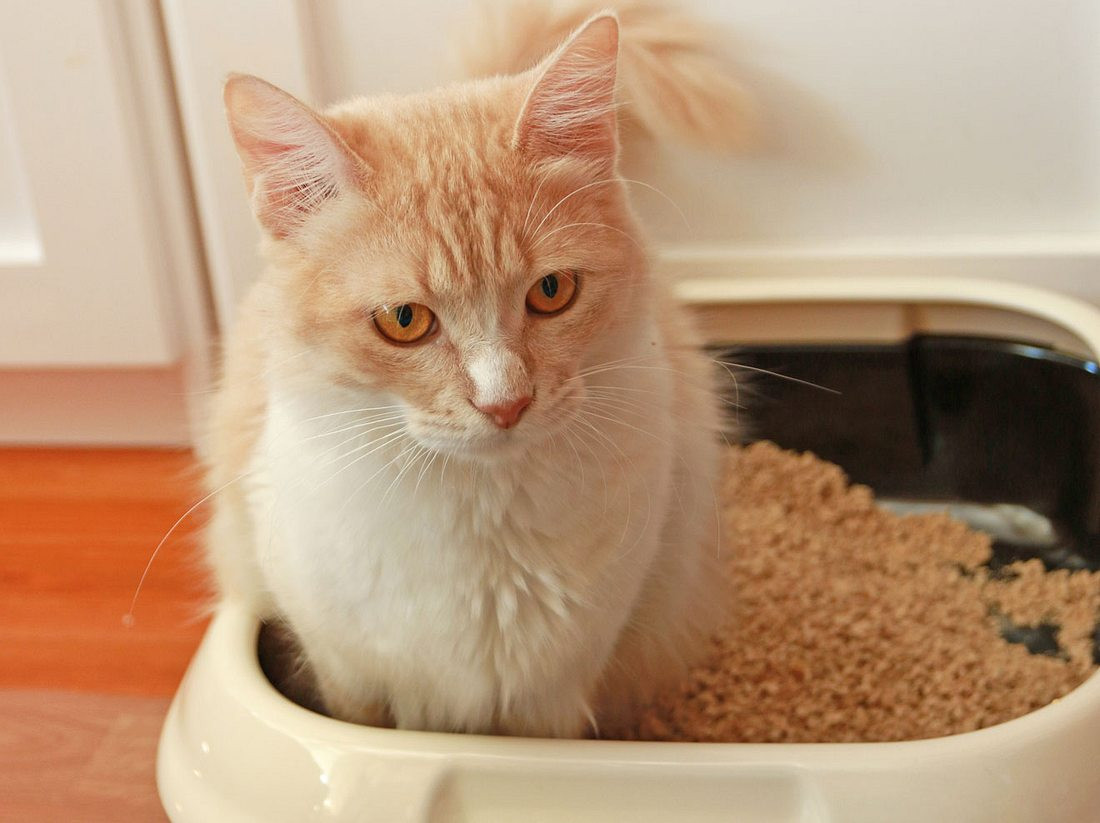 Was zu tun ist, wenn die Katze Durchfall hat.