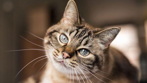 Der Charakter der Katze lässt sich an ihrer Fellfarbe erkennen