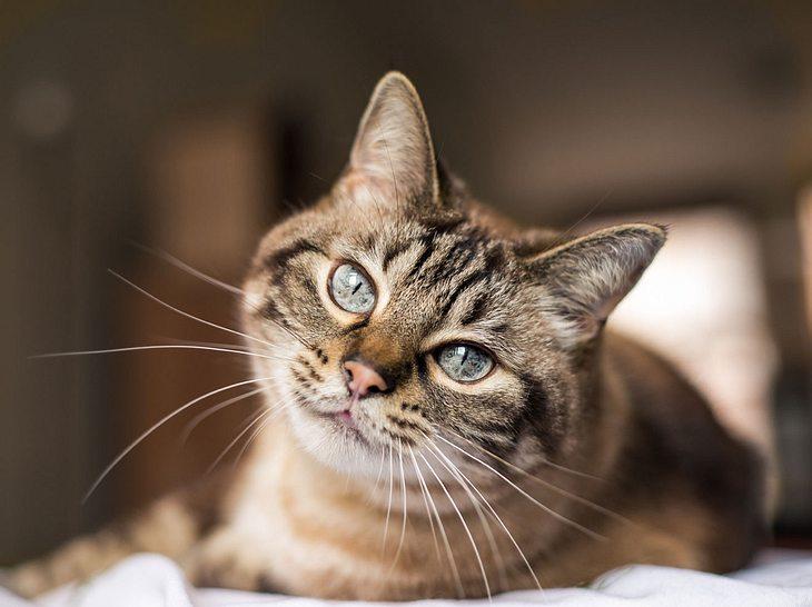 Die Farbe des Fells kann viel über den Charakter einer Katze verraten.