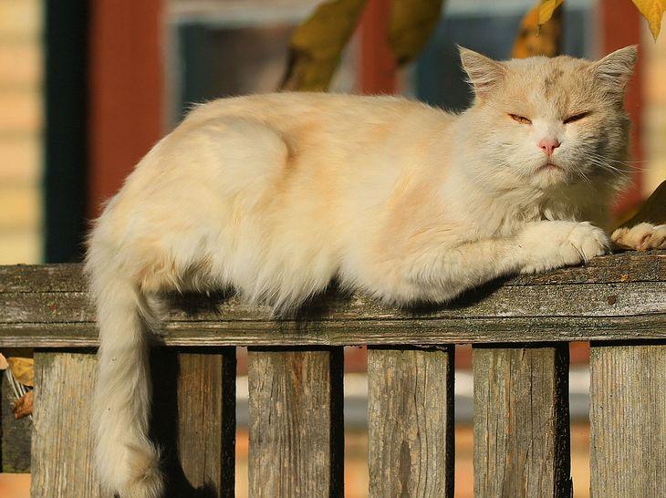 Schuppen im Katzenfell sind keine Seltenheit.