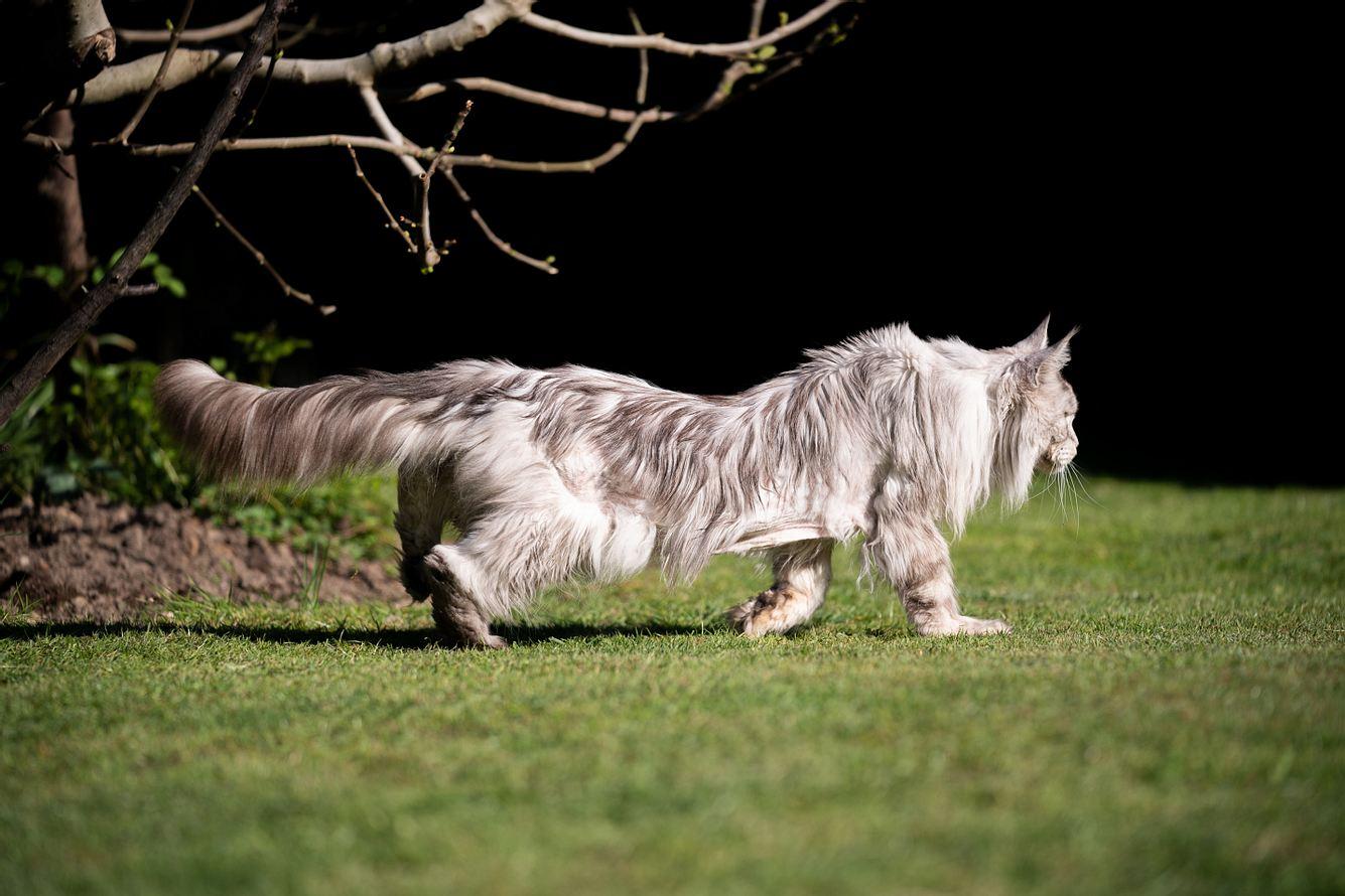 Eine Katze läuft im Garten.