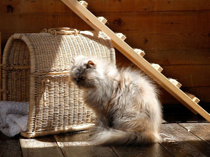 Katze mit Leiter