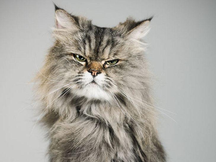 Wenn die Katze nachts Terror macht