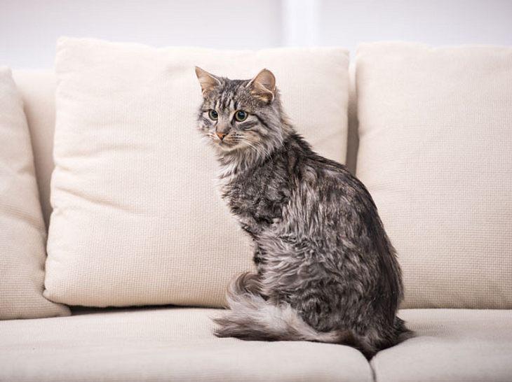 Was tun, wenn die Katze unsauber ist