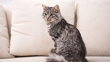 Wenn die Katze in die Wohnung pinkelt