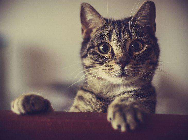 Welche Ursachen starkes Sabbern bei Katzen haben können.