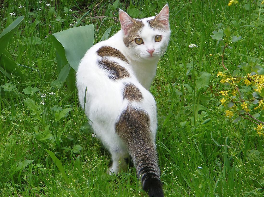 Katzen vertreiben: Diese Hausmittel schützen Ihre Beete Bilder